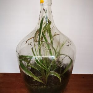 flesplant - De StadsZolder - Winkel - Ontruimingen